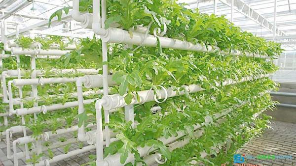 Hydroponic System For Greenhouse